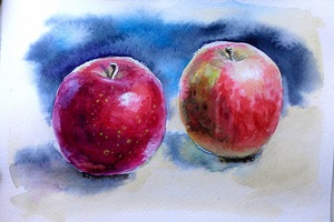 Яблука, акварельний етюд