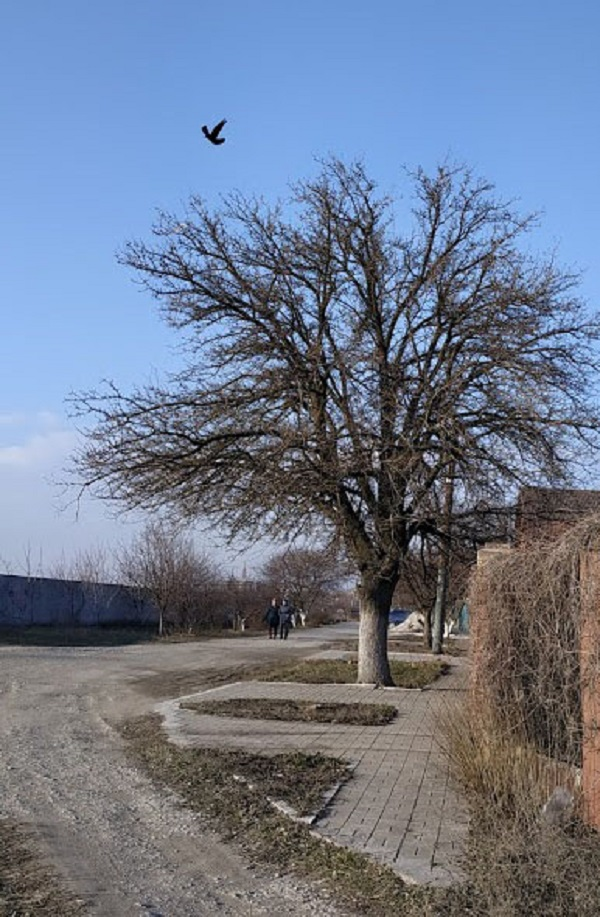 маленький элемент - птица снижает доминантное значение дерева