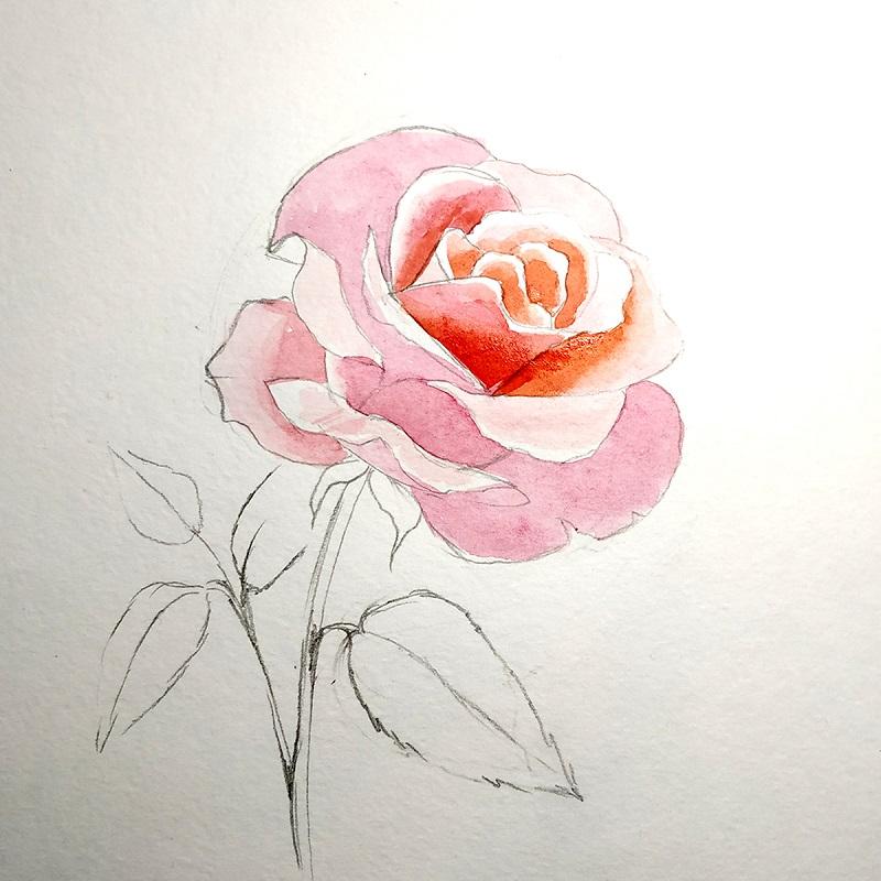 Профарбовуємо внутрішні частини квітки троянди