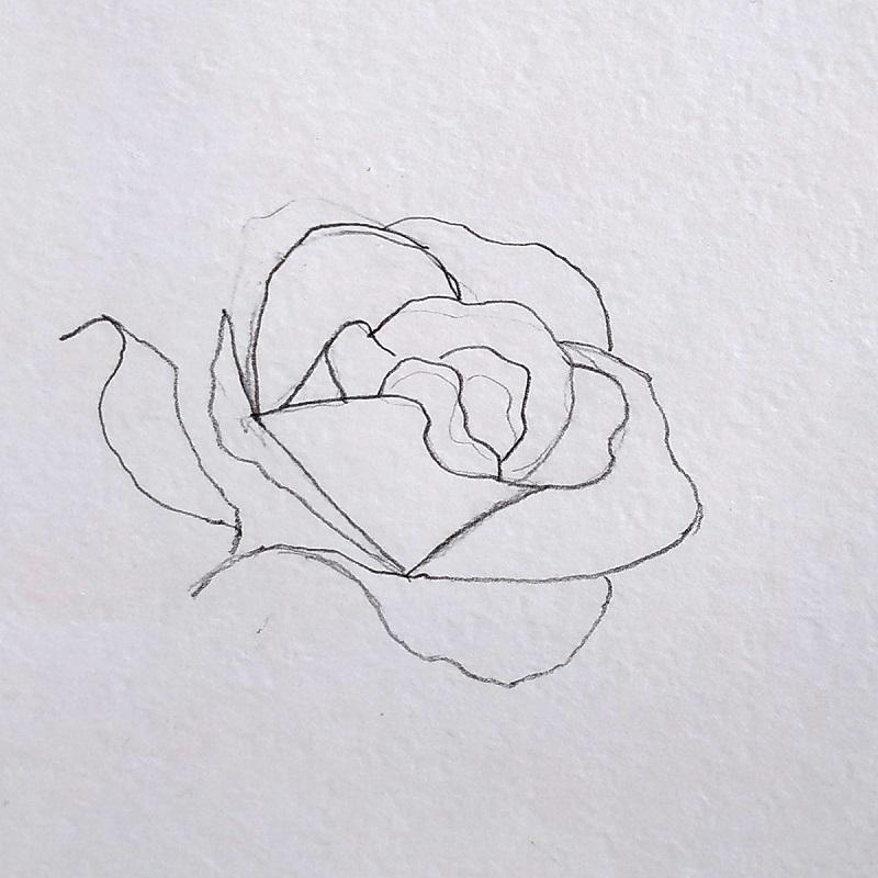 троянда олівцем 3