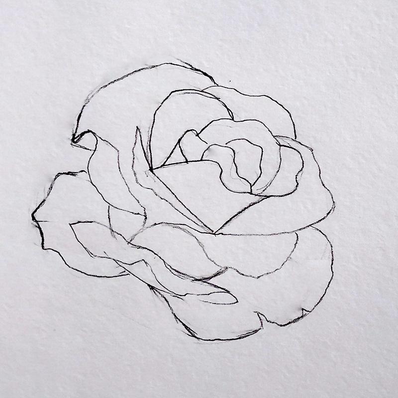 троянда олівцем 4